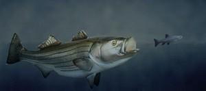 What do fish eat? Fish.