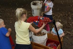 Children gathering walnuts